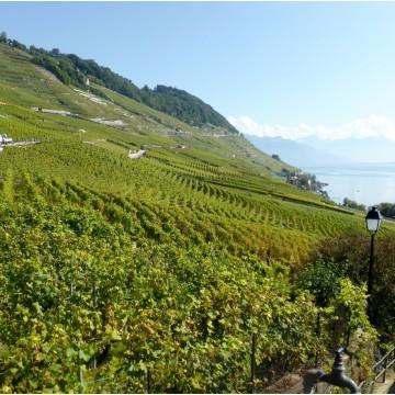 Route des vins du Monde -...